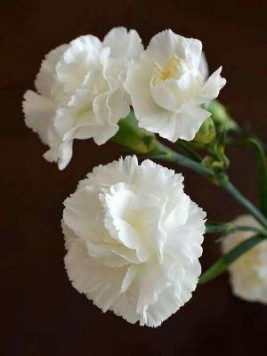Centro Flores Nairobi, Floristería Online, Envíos a Domicilio, Entregas de Flores, Centros de Flores, Comprar Flores Online