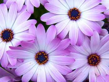 Ramo Flores Grecia, Floristería Online, Ramos de Regalo, Floristas Profesionales, Enviar Flores Urgentes,Comprar Flores en Madrid