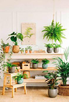 Planta Hortensia, Planta de Decoración, Planta para Cumpleaños, Planta par Regalar, Comprar Flores Online, Floristería Calero