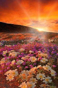 Floristerías Madrid, Floristeria online, Floristeria Calero, Floristerias baratas en Madrid, Dia de la mujer ramos de flores, envío urgente de flores